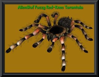 Spinnen Ressource