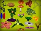 Pflanzen-Ressource von sinHHHans